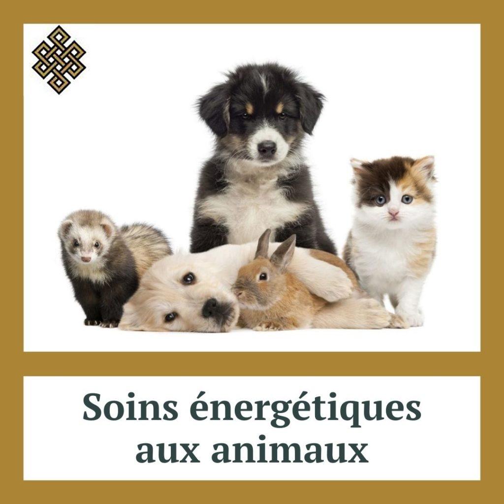 Soins énergétiques aux animaux